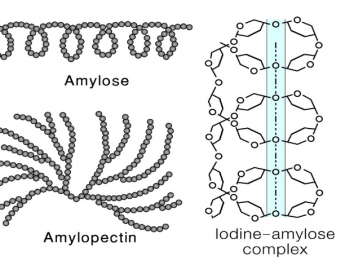 amylopectin_edited