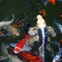 ในบ่อมีปลากี่ตัว