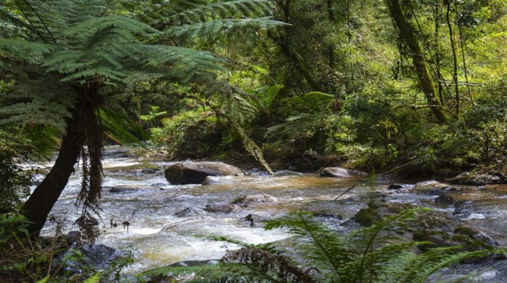 water-ecosystem