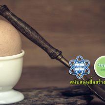 วิทย์ของการต้มไข่
